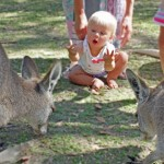 Savannah controls the kangaroos