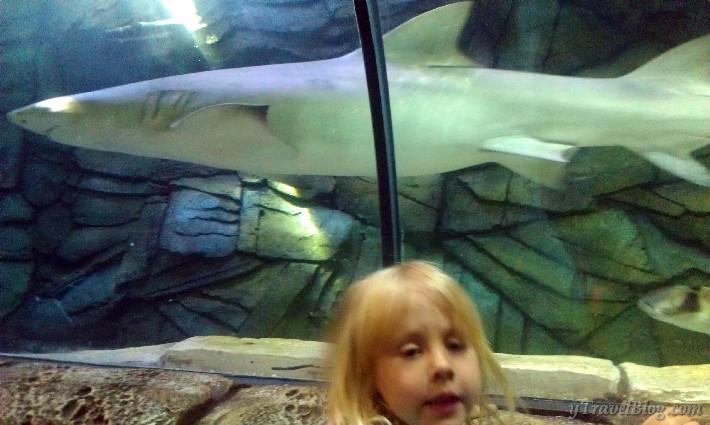 Sydney aquarium sharks