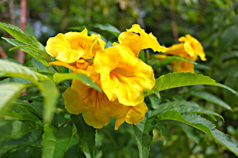 Beautiful-yellow-flowers