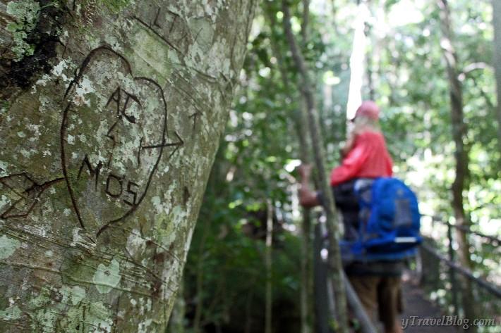 Minnamurra Rainforest Kiama