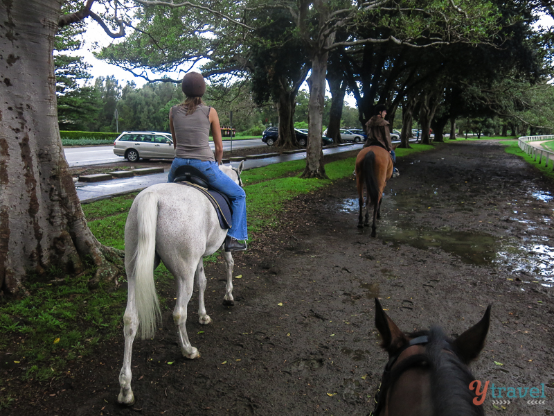 horse riding in Centennial Park
