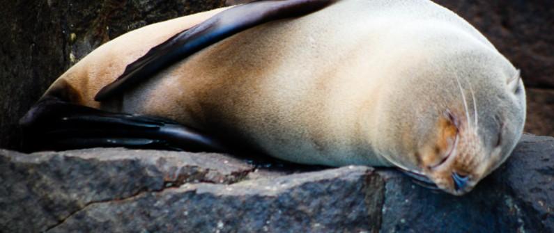 seals (5)